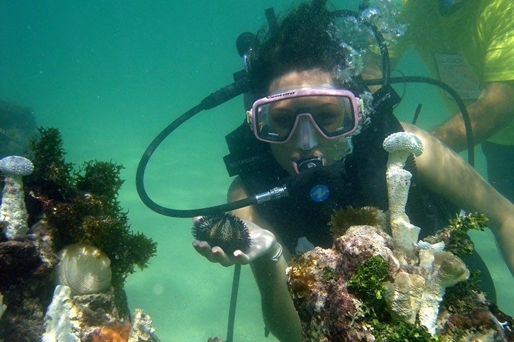 Passeio promove mergulho com cilindro nas piscinas de Paripueira