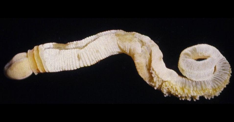 15.mar.2013 - Fósseis de um invertebrado com formato fálico estão ajudando os cientistas a entender a explosão de biodiversidade que a Terra viveu meio bilhão de anos atrás. Os restos de uma criatura de 10 centímetros, similar a um verme, foram encontrados em leitos de gás xisto no Parque Nacional Yoho, nas Montanhas Rochosas canadenses