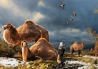 Cientistas descobrem que camelos viviam perto do Canad; saiba mais