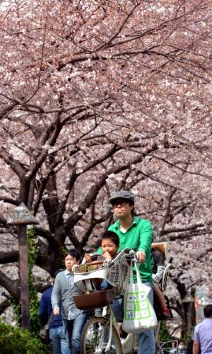 20.mar.2013 - Homem leva seu filho em bicicleta sob cerejeiras ao longo de avenida beira-rio em Tóquio. A floração das cerejeiras marca o início da primavera no Japão