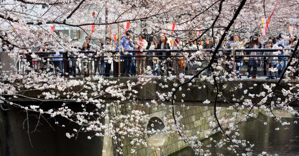 20.mar.2013 - Japoneses observam, do alto de uma ponte, cerejeiras florescendo em ?parque de Tóquio. A floração das cerejeiras marca o início da primavera no Japão e é um evento social, apreciado por milhões de pessoas
