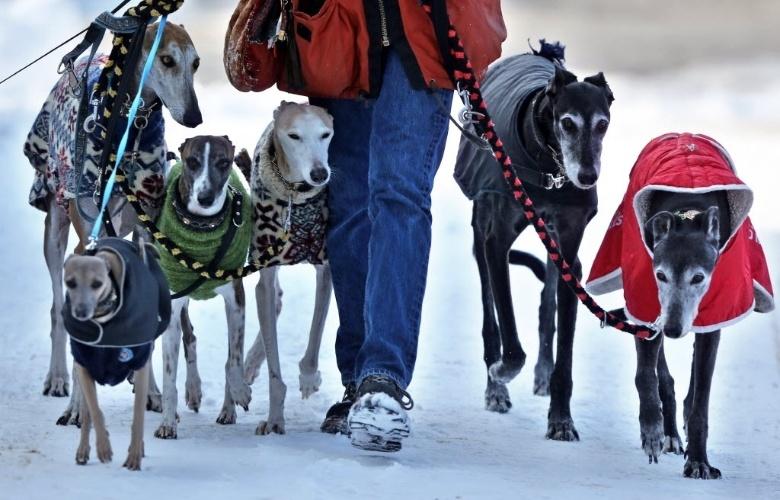 20.mar.2013 - Mulher passeia com cães em Woerlitz, na Alemanha