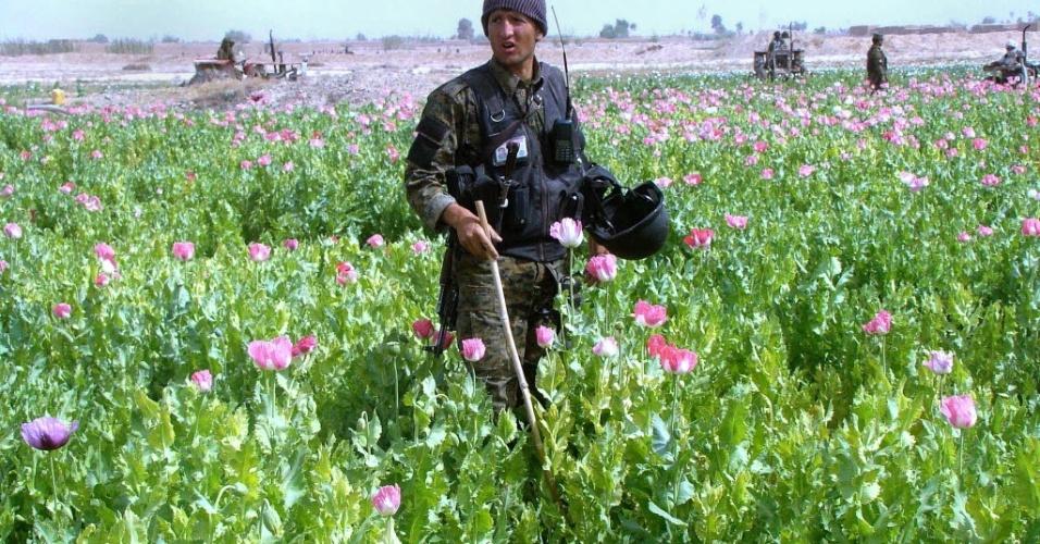 20.mar.2013 - Policial destrói campo de papoulas em área de província de Helmand, no Afeganistão