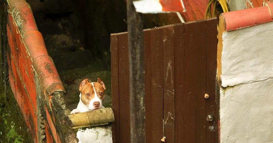 21.mar.2013 - Cachorro abandonado pelo dono na na comunidade Alto da Serra, em Petrópolis. Várias barreiras caíram na região isolando o local para o trânsito