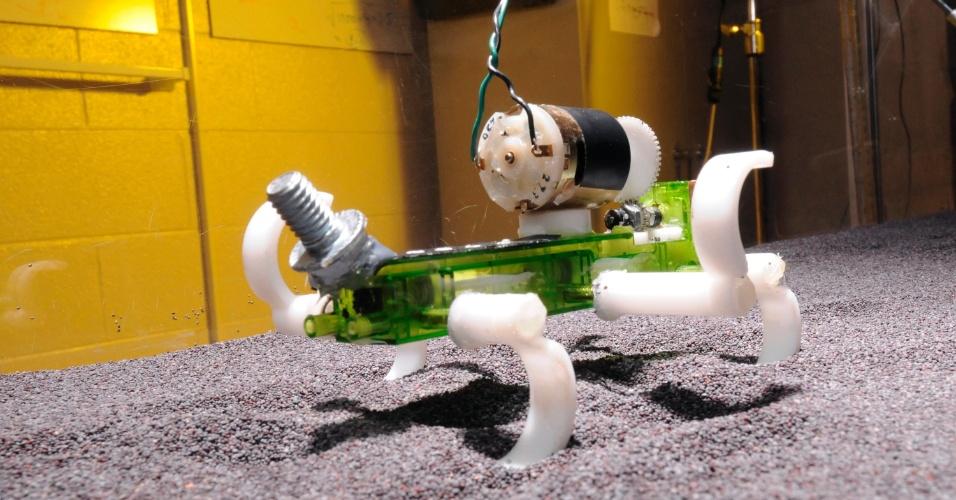 21.mar.2013 - Com apenas 150 gramas e 13 centímetros, esse robô com pernas finas e engraçadas corre tão bem na areia fofa quanto em terra firma. A proeza ajudou uma dupla de pesquisadores a desenvolver equações para prever movimentos mecânicos e saber se os equipamentos precisam acelerar ou não para evitar que atolem em superfícies mais granuladas. A pesquisa ajuda o trabalho de cientistas com robôs que são controlados remotamente em lugares desconhecidos, como é o caso do Curiosity em Marte