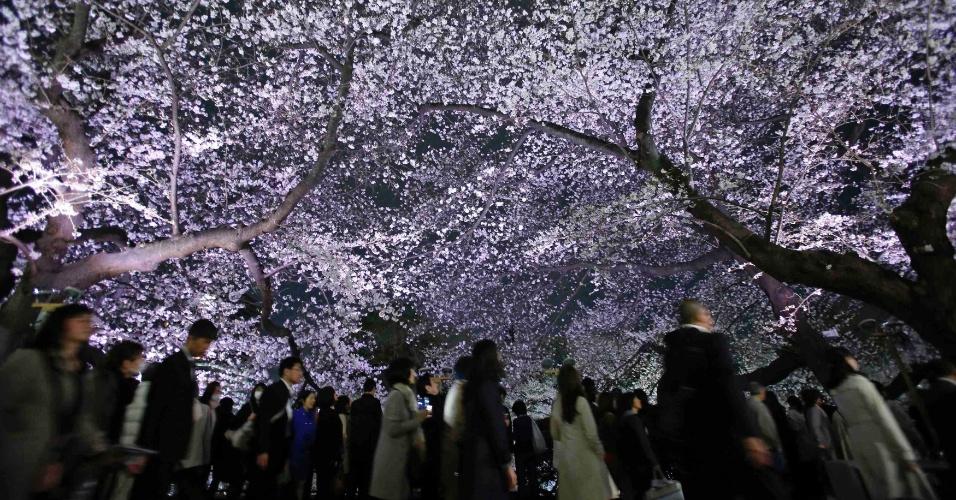 23.mar.2013 - Japoneses e turistas observam centenas de cerejeiras em rua de Tóquio