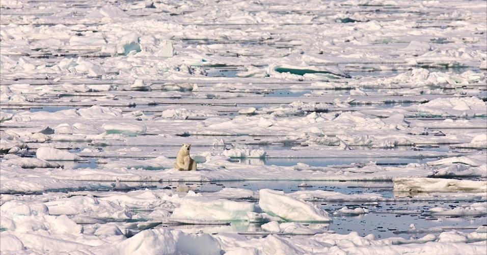 28.mar.2013 - ÁLBUM DA BBC - O aumento das temperaturas derretem o mar de gelo. Com isso, o número de ursos polares pode diminuir rapidamente, diminuindo também o contato de humanos com a espécie. Por outro lado, mais turistas e aventureiros irão para o norte, tentando ver os últimos exemplares da espécie. Acima, um urso polar em meio ao gelo de Svalbard
