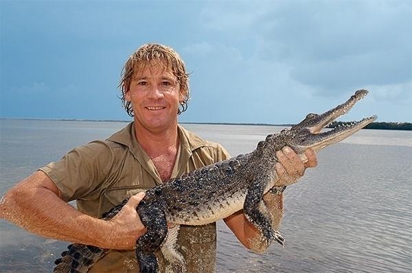 Steve Irwin morreu fazendo o que mais amava, ficando perto de animais perigosos. Ele morreu aos 44 anos, ao ser perfurado por um espinho venenoso de uma arraia, durante as filmagens de seu documentário para TV