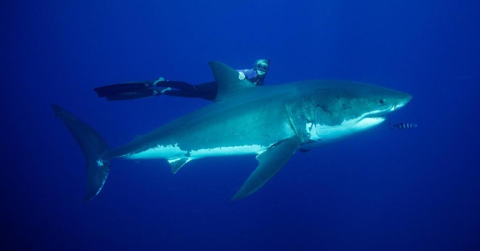 1.abr.2013 - Ocean Ramsay mergulha sem proteção agarrada à nadadeira de um tubarão branco com mais de cinco metros. A modelo que mora no Havaí afirma que a iniciativa com o predador martíimo não é para treinar animais selvagens, mas que faz isso há quatro anos como meio para a preservação da espécie - ela já mergulhou com 32 espécies diferentes de tubarão