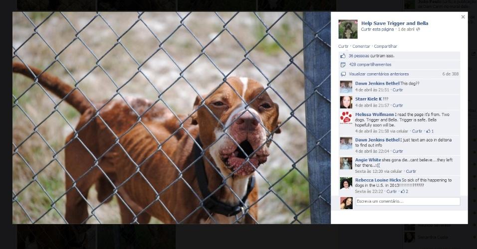 Moradora de Deltona criou a página ?Help Save Trigger And Bella? no Facebook, que alcançou milhares de curtidas e chamou a atenção de uma ONG de proteção aos animais