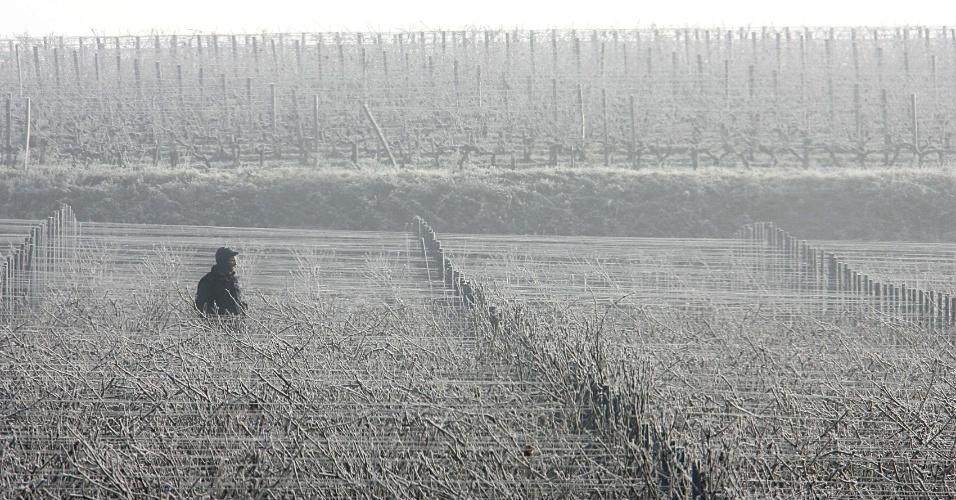 9.abr.2013 - O aquecimento global vai diminuir, em média, 68% da superfície de terras propícias ao cultivo da videira na Europa até 2050, segundo novo estudo. O clima vai obrigar uma mudança do cultivo de uvas para áreas mais frias do globo, o que pode afetar o habitat de animais ameaçados de extinção, como os pandas - a China é o país com maior crescimento na produção de vinhos atualmente