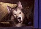Fotógrafo registra solidão de cães deixados em carros - Fotos - UOL ...