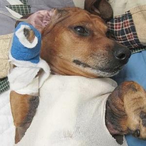 Após a cirurgia, Obie passa bem