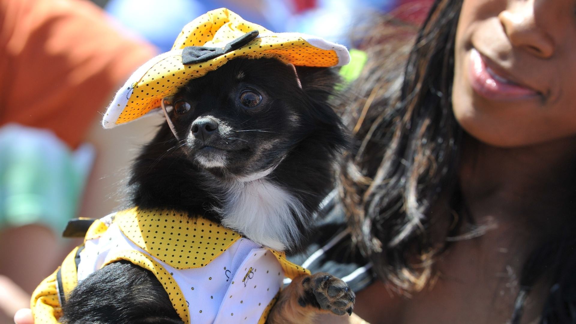 4.mai.2013 - Mulher segura cachorro da raa chihuahua fantasiado durante a 'Corrida dos Chihuahuas', neste sbado (4), em Washington. O evento faz parte das comemoraes do dia 5 de maio, no qual a comunidade mexicana celebra a vitria sobre as foras francesas em 1862