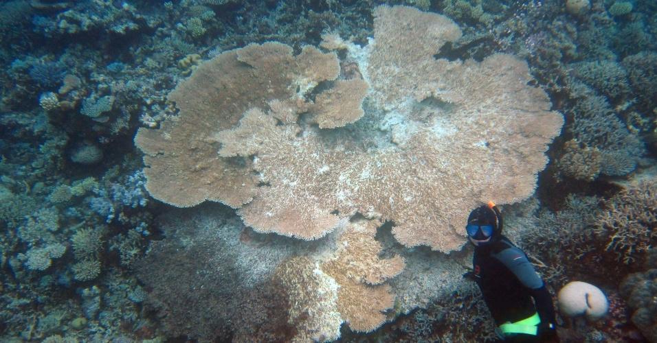 """6.mai.2013 - A Unesco, órgão da ONU (Organização das Nações Unidas) para a Educação, Ciência e Cultura, criticou duramente o governo da Austrália pelos """"progressos limitados"""" de proteção e conservação da Grande Barreira de Cora. A imensa faixa de corais, que atrai turistas do mundo todo, corre o risco de ser declarado """"em perigo"""" na lista de Patrimônio da Humanidade Ameaçado durante o congresso anual da Unesco que ocorre no próximo mês, em Phnom Penh, no Camboja"""