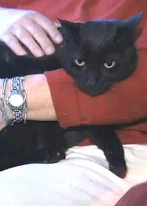 Porsche, gato de 8 anos desaparecido no furacão Sandy, que atingiu os EUA em outubro de 2012