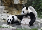 Panda gigante acaricia filhote enquanto toma banho em reserva na China  (Foto: China Daily/Reuters)