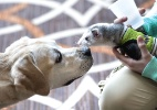 Pets e seus donos se divertem em encontro de blogueiros  (Foto: AFP)