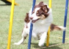 Ces participam de Campeonato Brasileiro de Agility  (Foto: Felipe Camargo/Sigma Six)