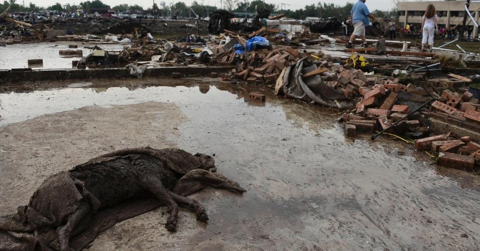 21.mai.2013 - Animal é encontrado morto entre os escombros da garagem de uma casa em Moore (EUA), após a passagem de um tornado que devastou a cidade norte-americana. O desastre natural deixou dezenas de mortos
