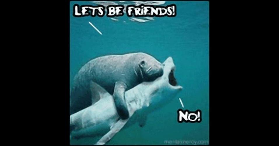 Na imagem, a legenda 'Vamos ser amigos. Não!'. A modinha da web Shark Attack - Ataque de Tubarão - consiste em brincar com imagens de tubarões, fazendo montagens e colocando o bichano em diferentes cenários e posições