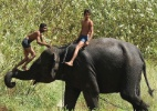 Menino se equilibra em tromba de elefante na ndia  (Foto: Sajjad Hussain/AFP)