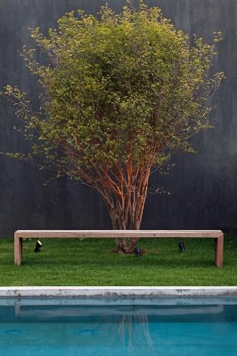 A jabuticabeira é uma das árvores que compõem o jardim da casa Boaçava, projeto dos arquitetos do escritório paulistano Una