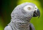 ¿Qué pasa? Papagaio some por 4 anos e volta para casa falando espanhol (Foto: Reprodução)
