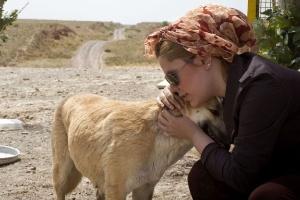 Irã confisca cães de estimação para combater a 'vulgar cultura ocidental' (Foto: Behrouz Mehri/AFP)