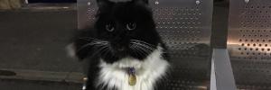 Pet Money: Gata é promovida a gerente de Controle de Pragas em estação de trem inglesa