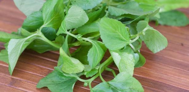 A erva anestesiante Jambu é vista em pratos como o tacacá e até em drinques