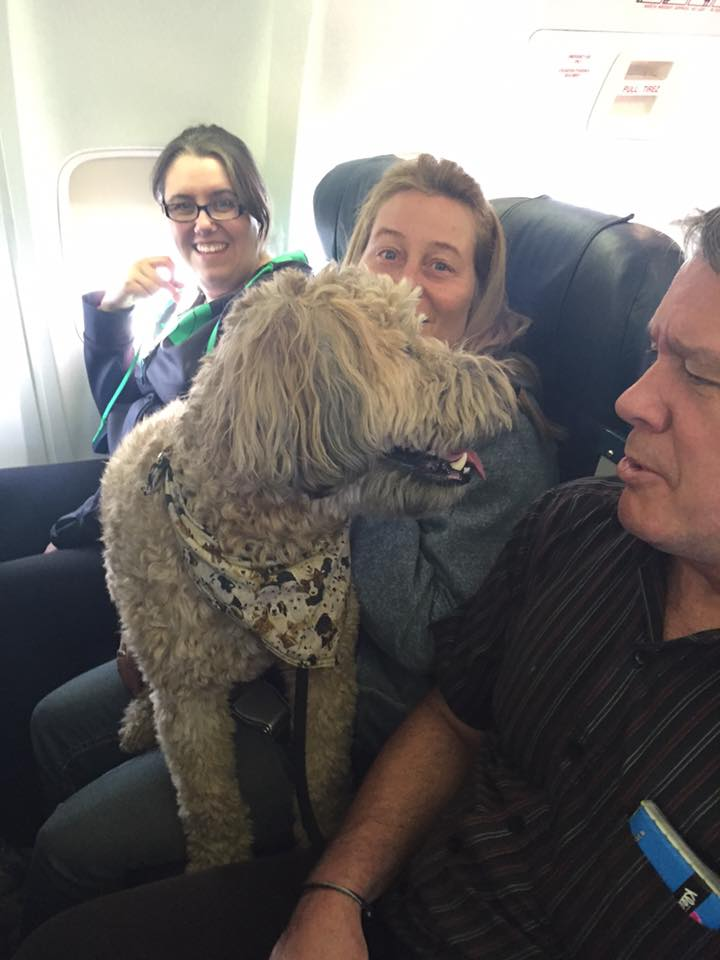 Cachorro folgado viaja no colo, a bordo de avião da Canadian North - Foto: Facebook/Wanda Murray