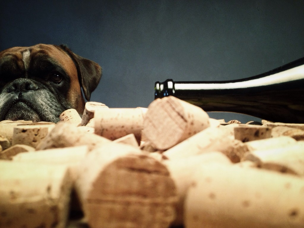 Dog behind used wine corks and bootle.
