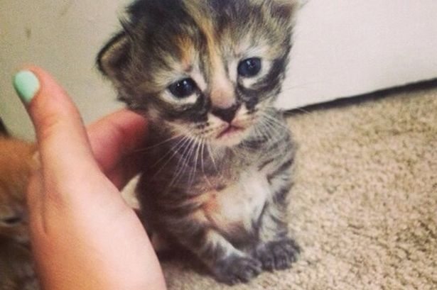Cute-Sad-Kitten