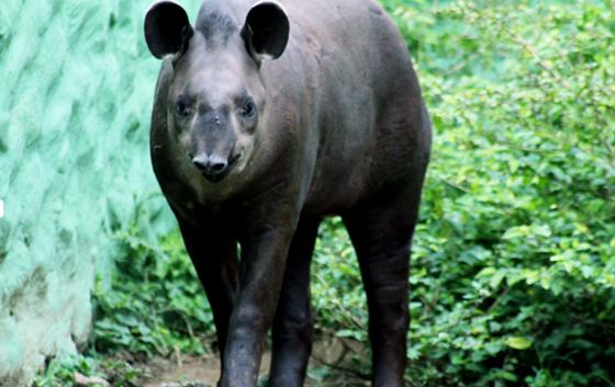 anta-zoo