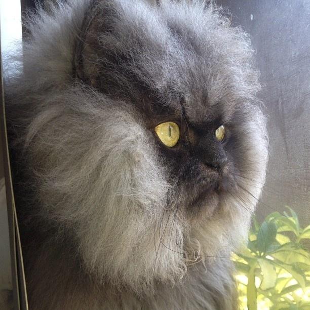 1.set.2013 - Os donos Anne Marie Avery e Eric Rosario criaram uma personalidade extravagante para Colonel Meow na internet