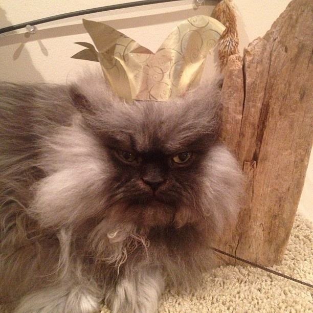 1.set.2013 - Para combinar com a personalidade que os donos inventaram para seu gatinho, Colonel Meow posa com uma coroa na cabeça, agradando seus milhares de seguidores, que entram na brincadeira e o tratam como um rei