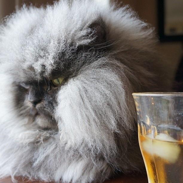 """29.set.2013 - O gato Colonel Meow já era um """"meme"""" da internet, por suas fotos com expressões mal-humoradas. Agora o felino entrou para o Livro dos Recordes Guinness por possuir o pelo mais longo, com 22,87cm de comprimento"""