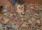 Crise? Que crise? Para estes gatos, dinheiro não é problema (Foto: Reprodução/Instagram @cashcats)