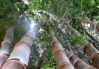 A linguagem do meio-ambiente - Reprodução/rosalba.com.br