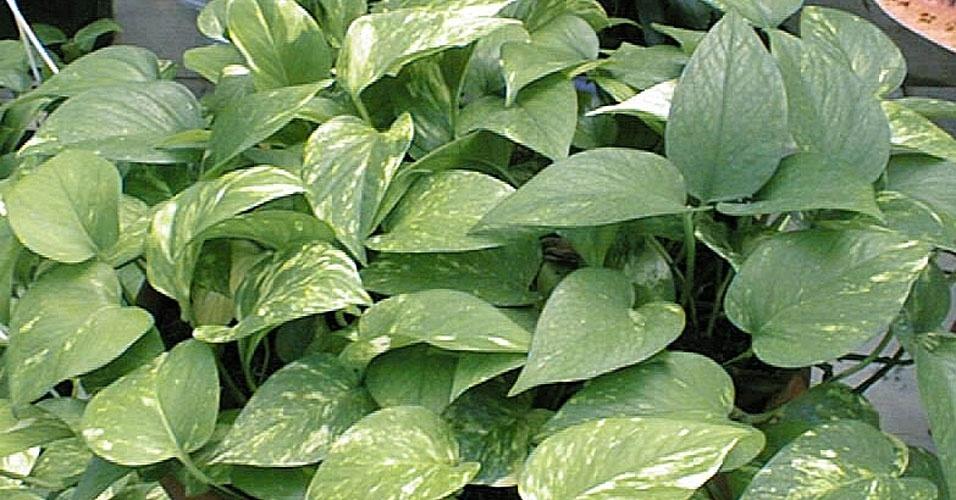 plantas de jardim que gostam de umidade : plantas de jardim que gostam de umidade: da umidade, ele gosta de ambientes sombrios Reprodução/YouTube Mais