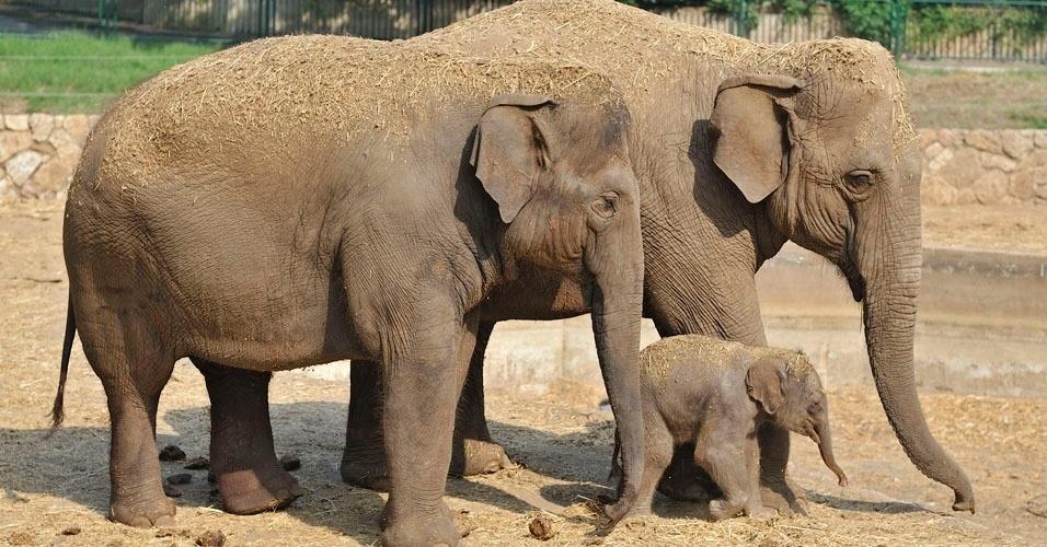 Resultado de imagem para elefantes