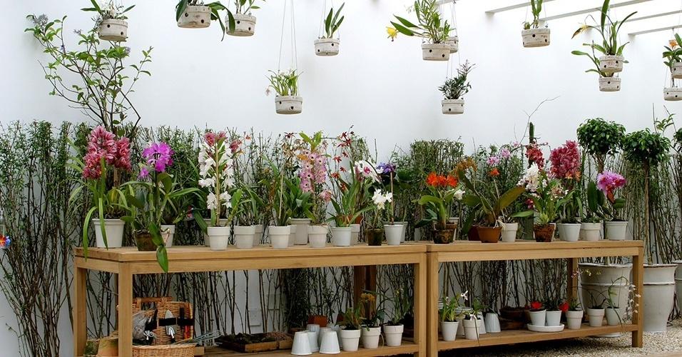nas bancadas de ipê estão expostas espécies variadas de orquídeas