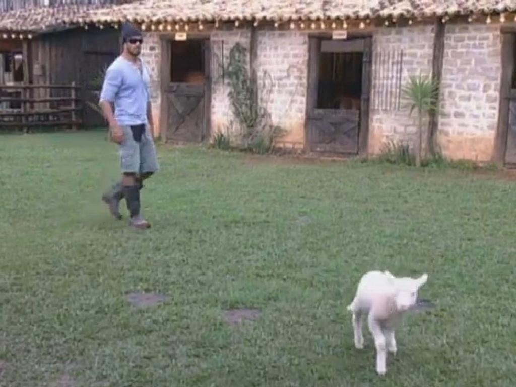 30.jun.2013 - Beto Malfacini corre atrás de filhote de ovelha fujona