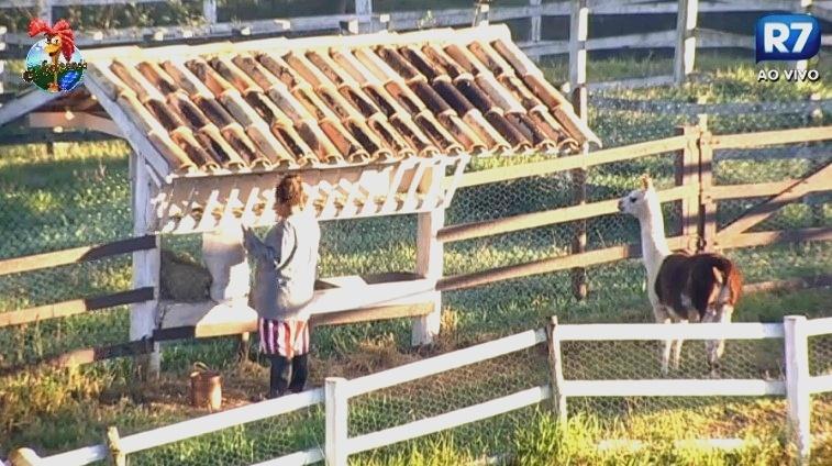 07.jul.2013 - Lhama observa Gomindo fazendo a limpeza no local de alimentação
