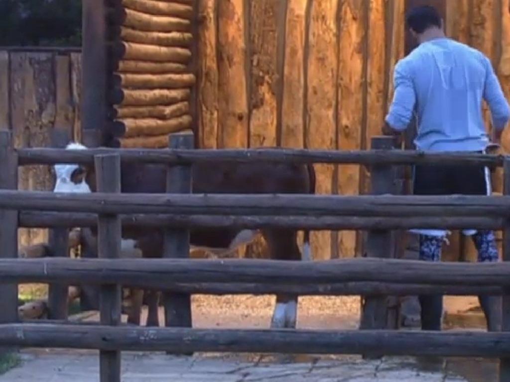 9.jul.2013 - Enquanto isso, Beto já está cuidando das vacas, mas aprece que o modelo está um pouco perdido com o manual