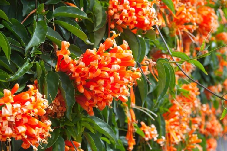 algumas espécies de flores e plantas floridas resistentes ao inverno