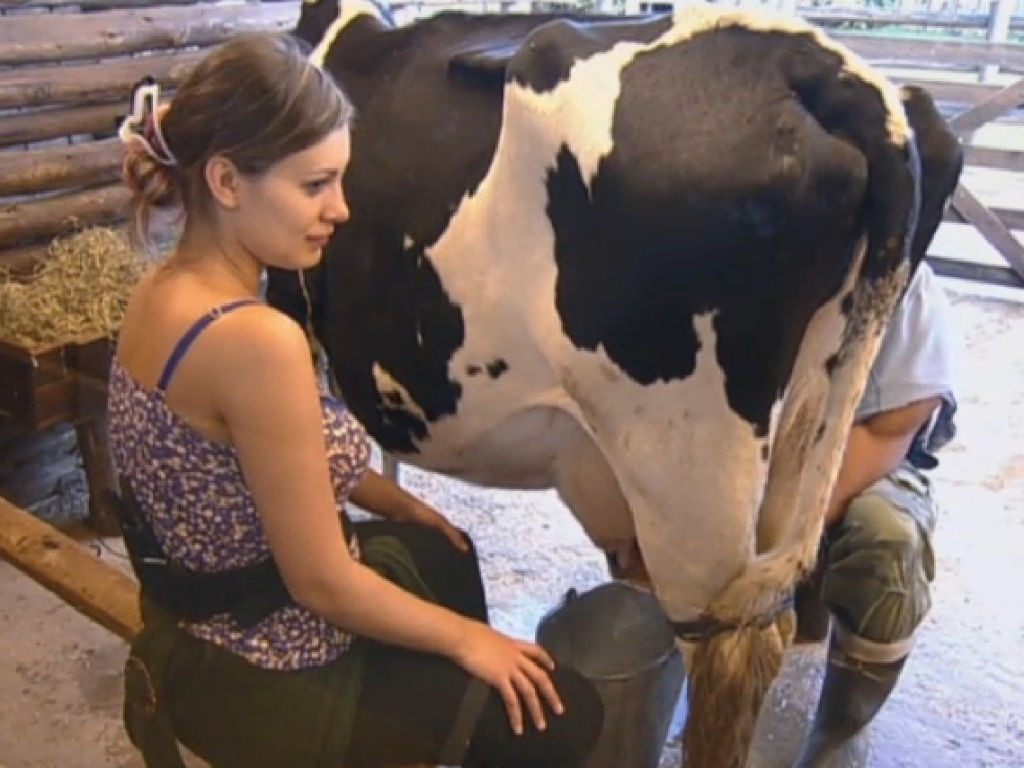 21.jul.2013 - Andressa tira o leite da vaca na manhã deste domingo