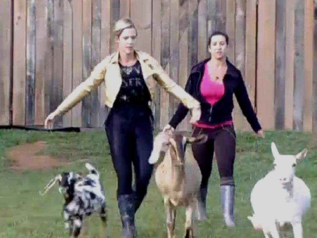 21.jul.2013 - Com ajuda de Scheila, Denise toca as cabras para o pasto