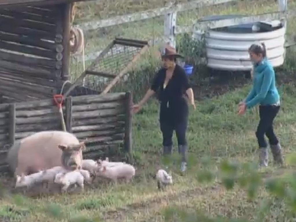 22.jul.2013 - Bárbara recebe ajuda de Scheila Carvalho para cuidar dos porcos